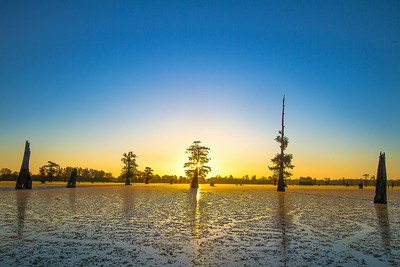 ATCHAFALAYA CYPRESS SUNRISE