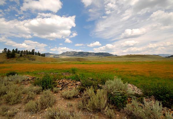 Back Country Splendor, Yellowstone National Park