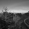 Looking at Mt. Diablo from Tilden Park