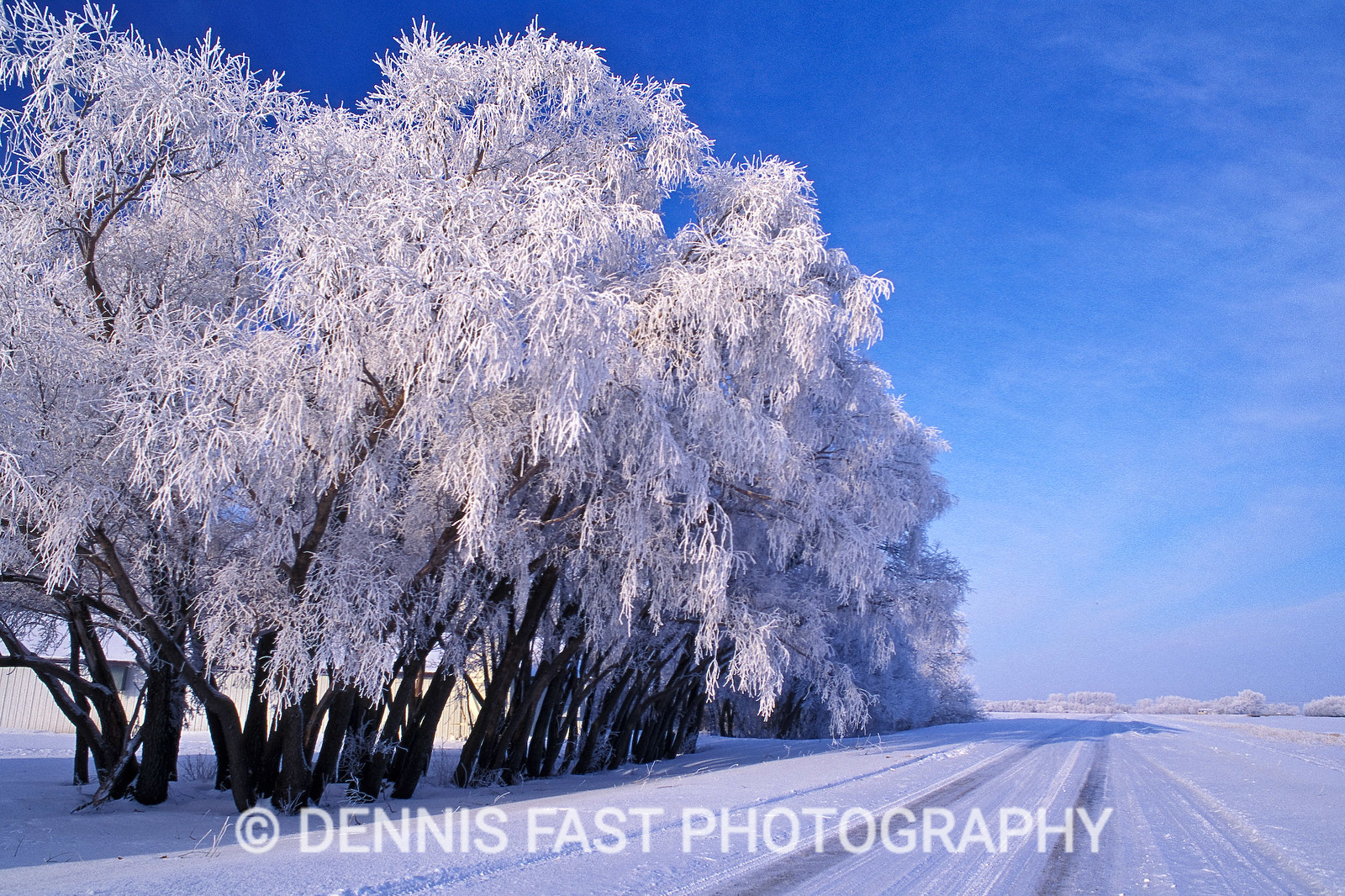 HOARFROST ALONG COUNTRY ROAD.  The beauty of hoarfrost is self-explanatory. Everything it touches takes on the essence of magic, and turns the ordinary into the extraordinary.