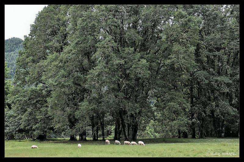 Underneath the Oak Trees