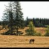 Golden Pasture