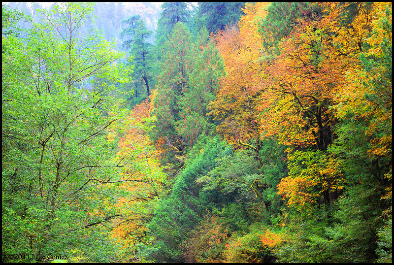 Mill Creek Canyon--Loon Lake, Oregon--southern Oregon, Coast Range Mountains.  (10-19-2011)
