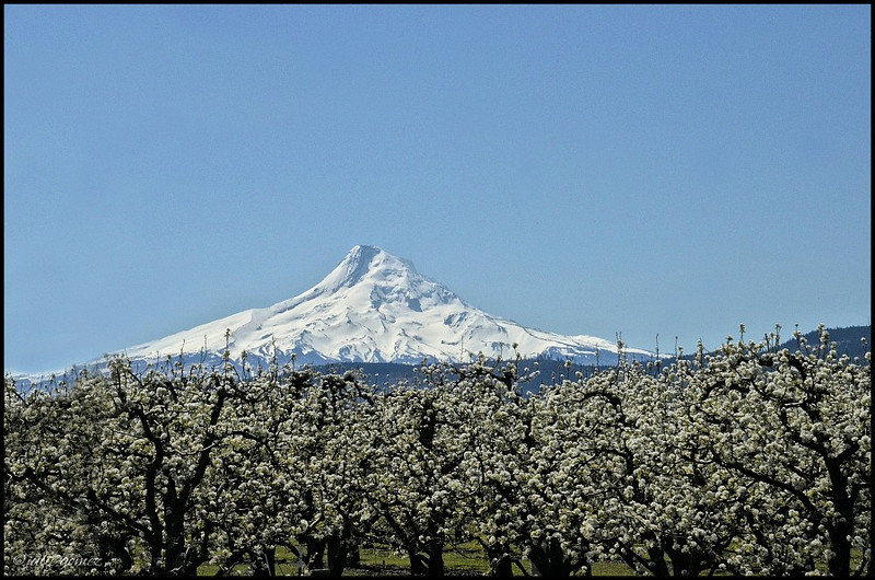 Hood River Valley Blossom Festival