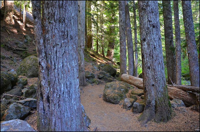 Little Zigzag Falls Trail
