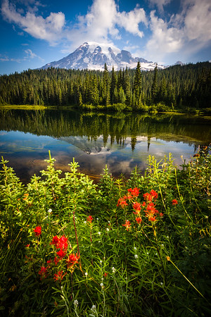 Mt. Rainier - Washington
