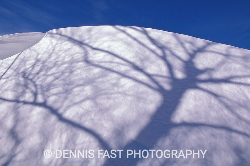 TREE SHADOW ON SNOWDRIFT.  I love going out after a blizzard to photograph the pristine drifts and sensuous shapes that were created by the storm. The shadow of the tree on the fresh snow only enhances the beauty of the scene.
