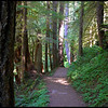 Upper Salmon River Trail--Mount Hood National Forest, Oregon.  (8-2011)