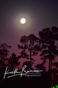 Full Moon, 2010, Wellington Florida