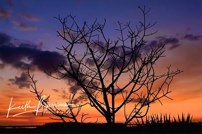 Dramatic Red Sunset, Florida
