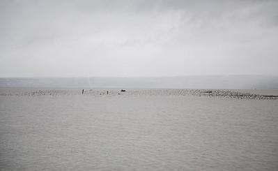 Port Susan Bay_003