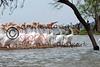 LakeSugarMEX 3-2015-036 pelicans