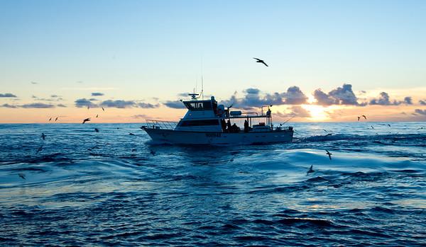 20100824 0656 Cova Rose - West Coast Tuna trip _MG_3934