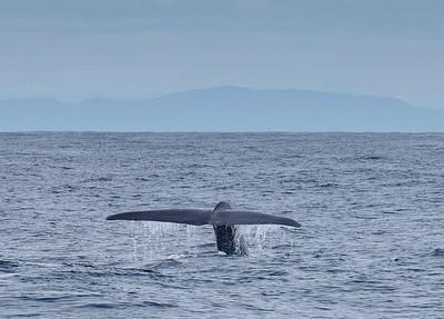 Whale off Westport, New Zealand on 5 September 2011