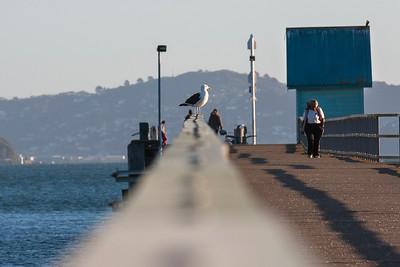 20140327 Petone Wharf _MG_9556
