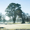"""Images captured in the early morning fog on a frosty morning at Royal Wellington Golf Club, Heretaunga, Wellington, New Zealand on Sunday, 16 July 2017. Copyright: John Mathews 2017.   <a href=""""http://www.megasportmedia.co.nz"""">http://www.megasportmedia.co.nz</a>"""