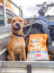 20170905 Ian with dog food - D'Urville trip IMG_3909