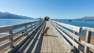 20190418 Ian on French Pass wharf - D'Urville  _JM_2767