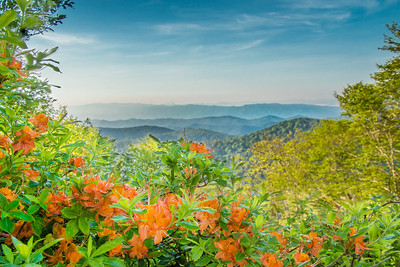 _MG_0387 Great Smoky Mountains Cades Cove Smokies Tennessee Clingmans Dome Newfound Gap Sunrise Sunset GSMNP Black Bear Cub Cubs White Tailed Deer Buck Fawn Doe untitled