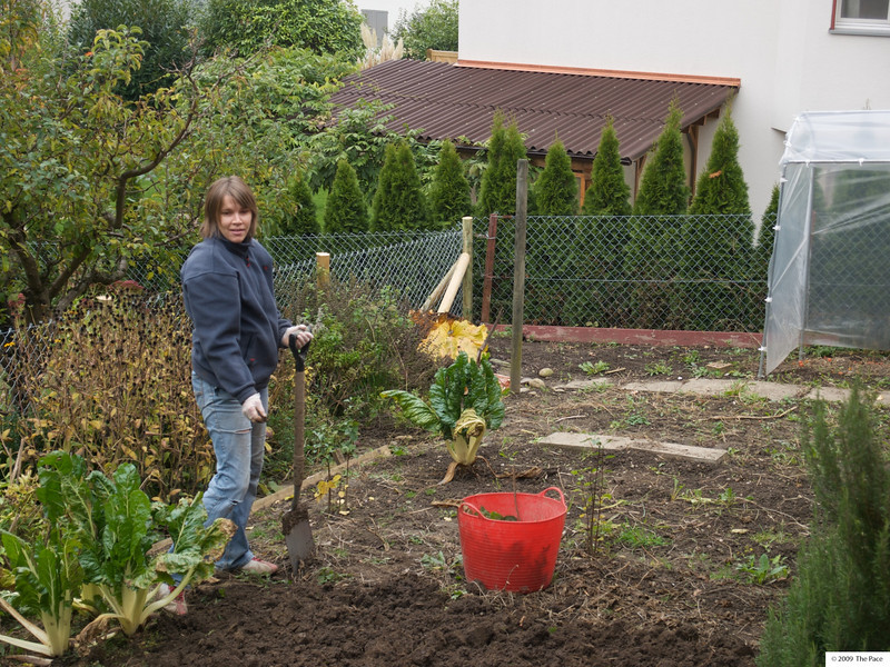 Monday 2nd Nov 2009 - Kerstin prepares the garden for next year