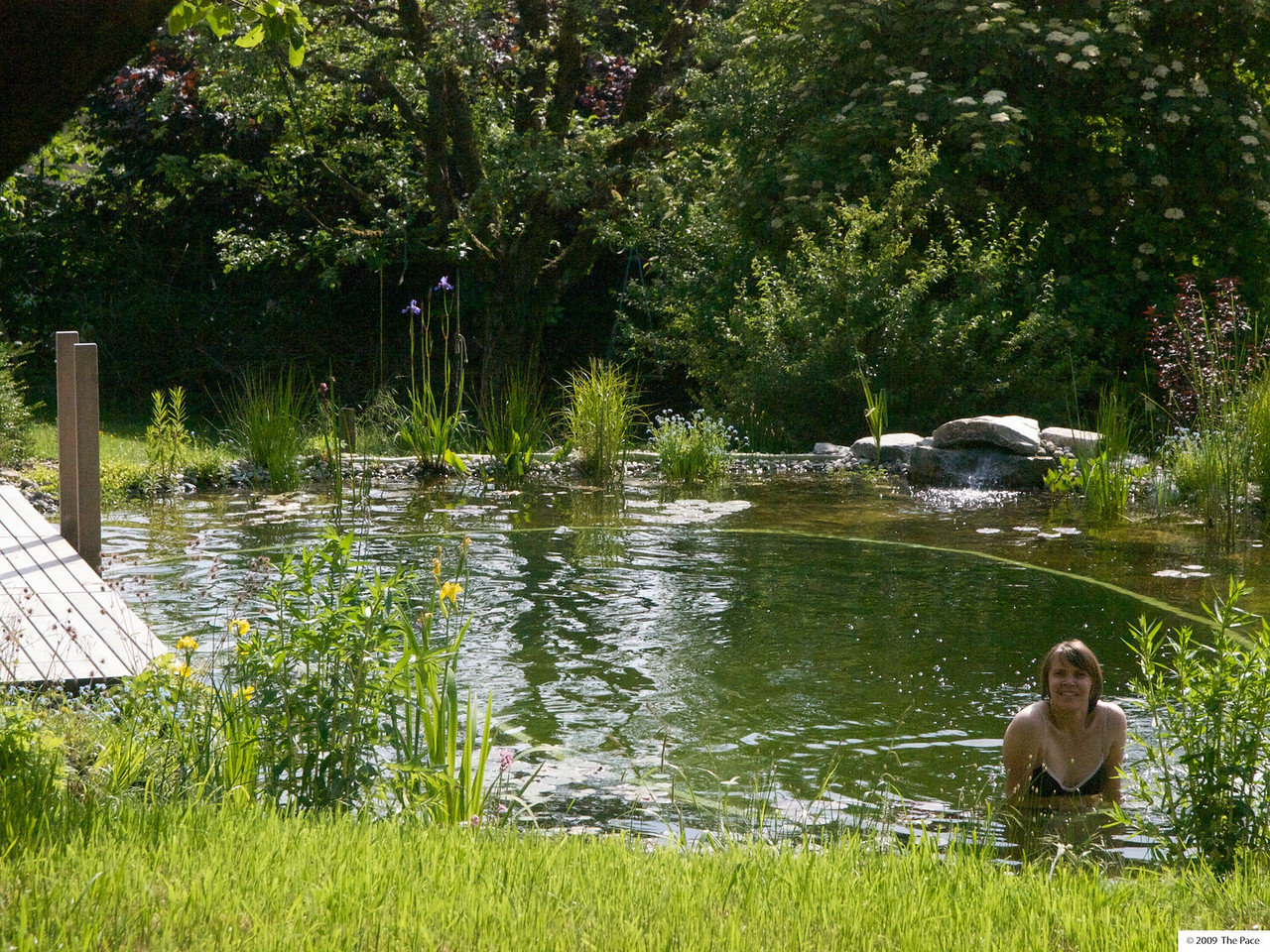 Monday 25th May 2009 - This year we have more time to enjoy the pond