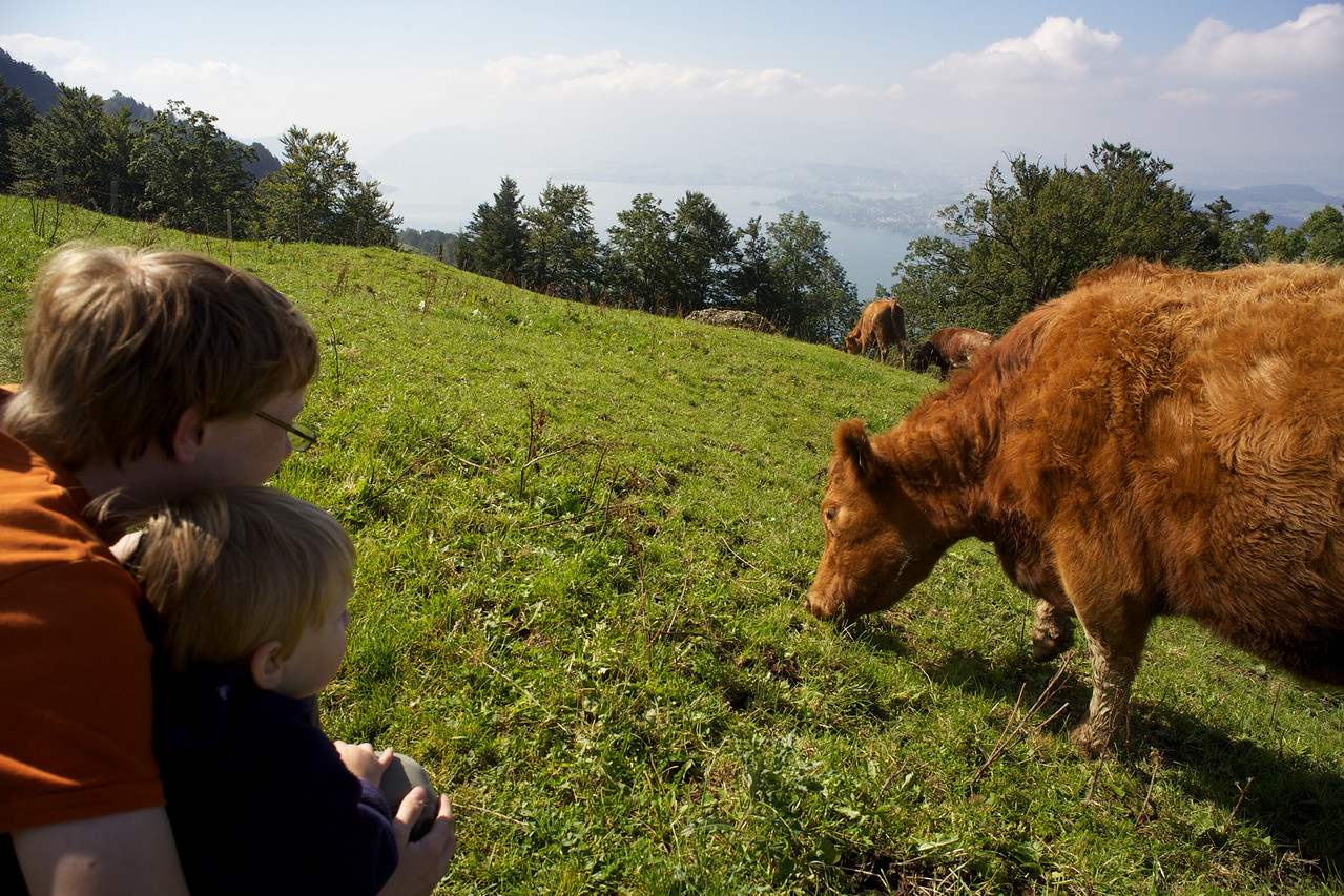 Sunday 17th Sept - getting close to the cows