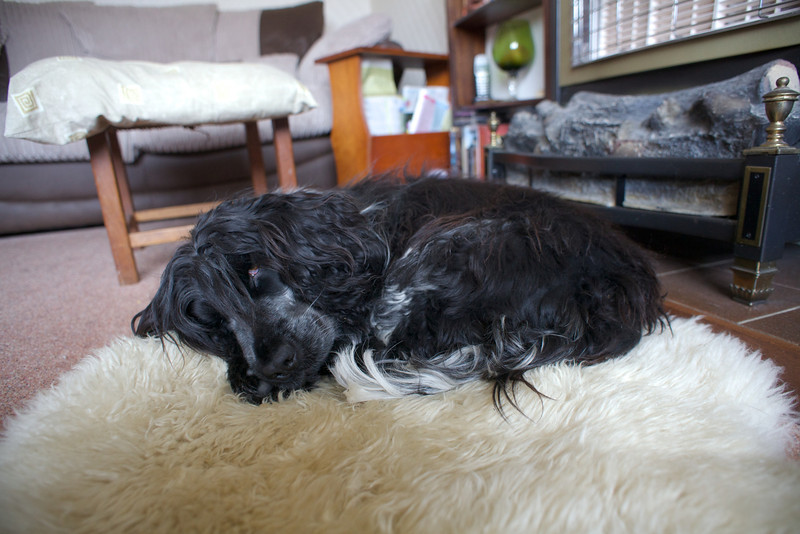 Sunday 19th Feb 2012 - Let sleeping dogs lie