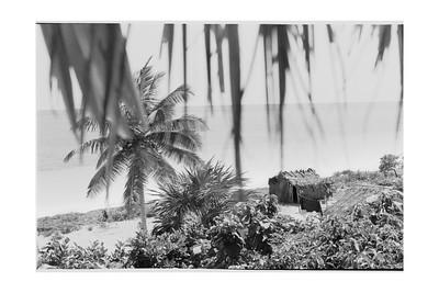 Tulum: View from My Window