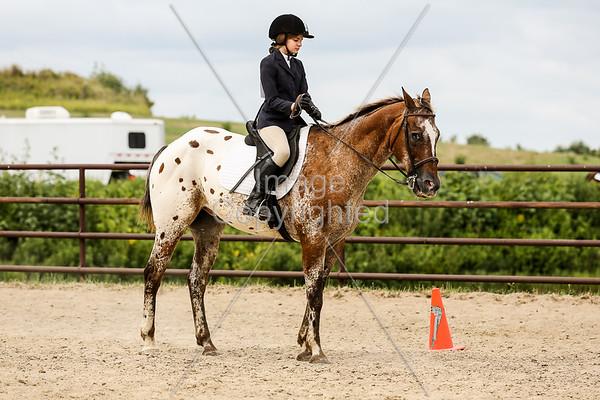English Pleasure Equitation 10-12