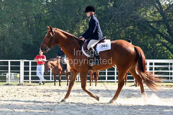 English Equitation 10-12