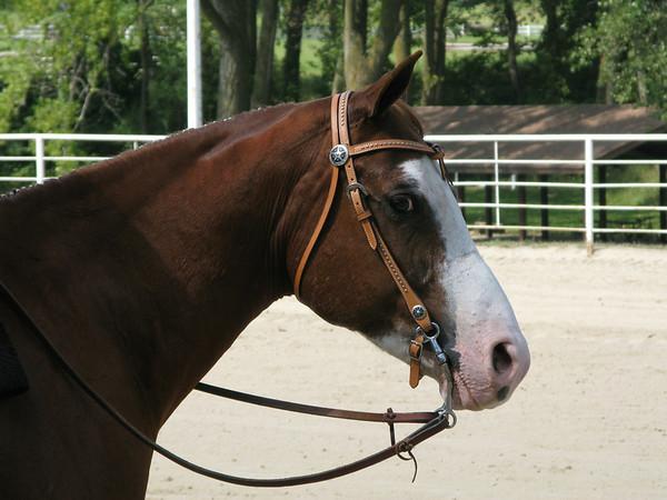 Western Horsemanship 7-9