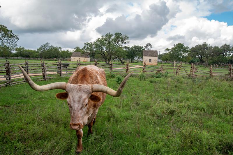LBJ's Texas