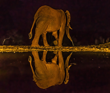 Elephant NH 244 207 300dpi DONE NOISE 3230-.jpg
