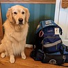 Tobias Comfort Dog Preparing for Deployment to Surfside