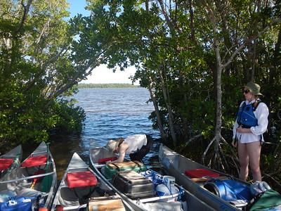 Everglades Winterim 2014