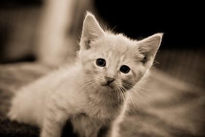 LCHS Cats
