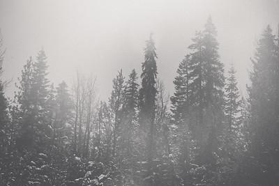RSV 2nd Snow 2013-28