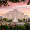 Albuquerque Morming Rose