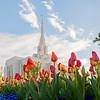 Ogden Tulips