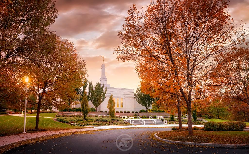 Autumn Palmyra