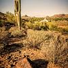 Phoenix Cactus Hill