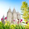 Salt Lake Spring Tulips