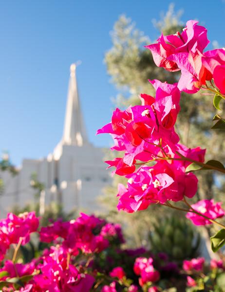 Safford AZ LDS Temple