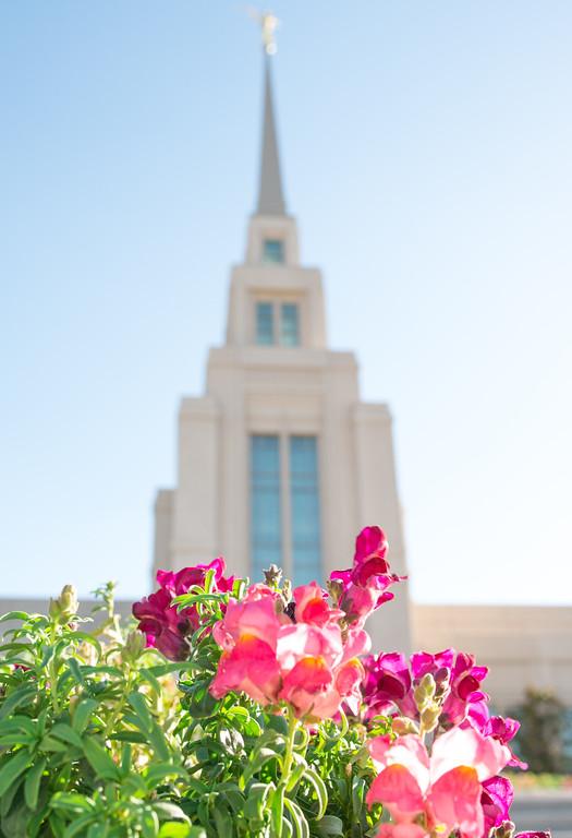 Safford LDS Temple