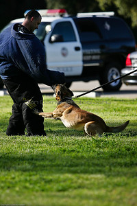 K9 Training El Monte Park-73