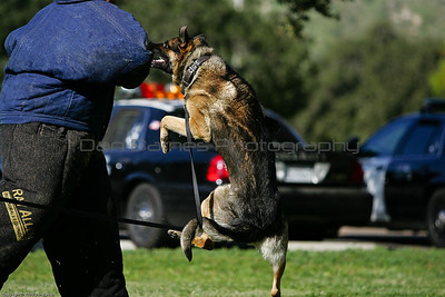 K9 Training El Monte Park-44
