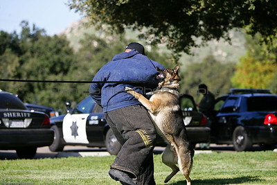K9 Training El Monte Park-33