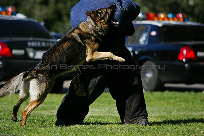 K9 Training El Monte Park-43