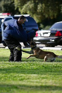 K9 Training El Monte Park-57