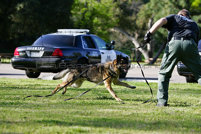 K9 Training El Monte Park-41